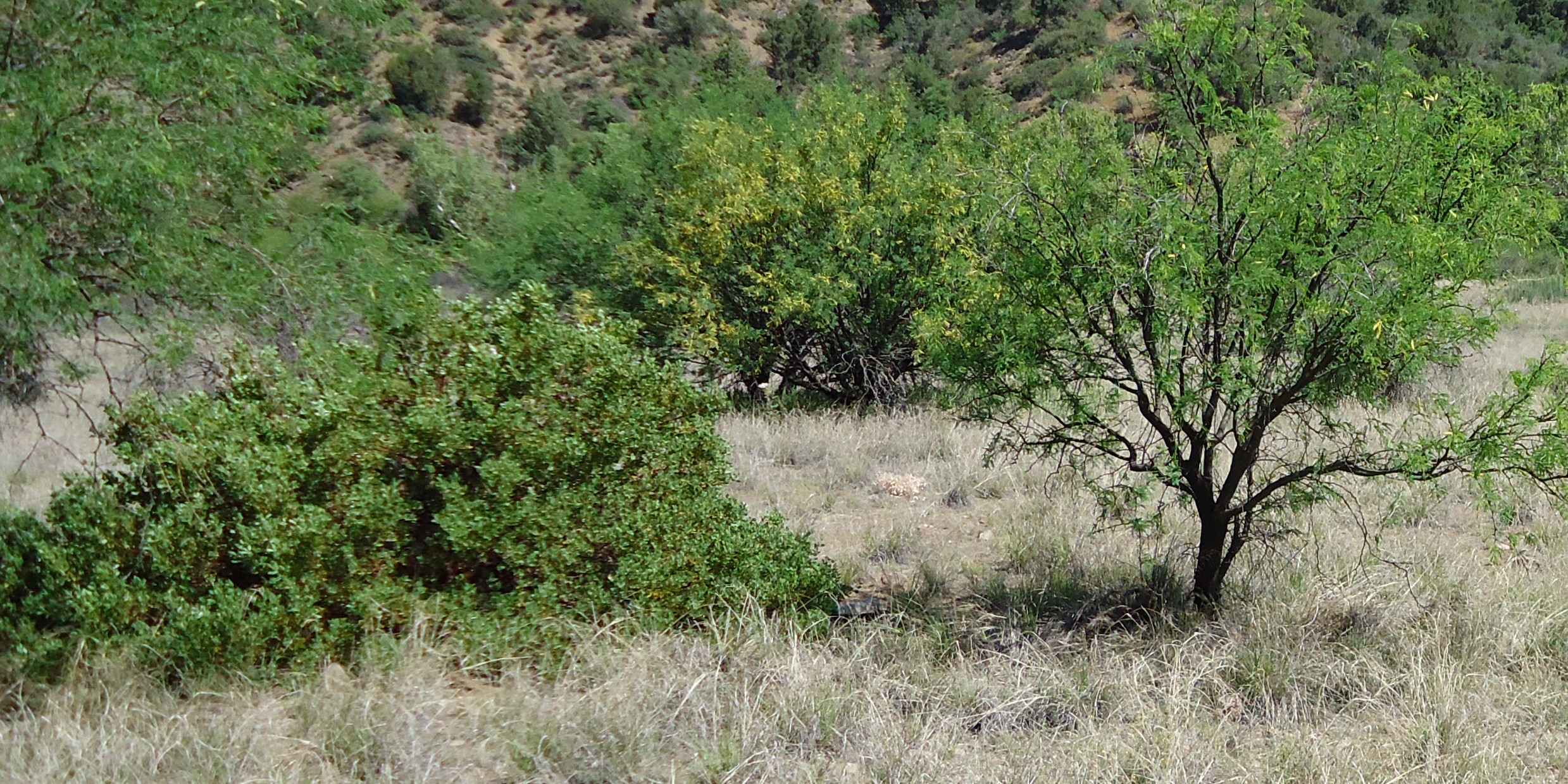West Fork Pinto Creek Canyon, Tonto National Forest