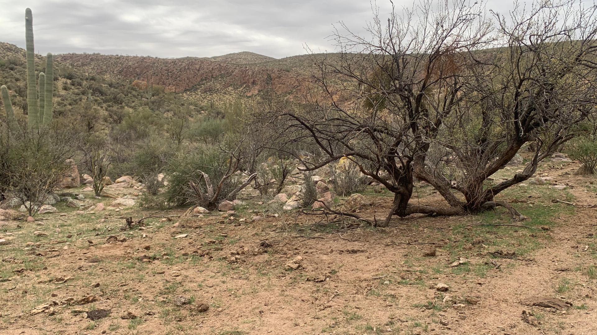 cattle damage White Canyon